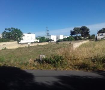 V559, Terreni Edificatori